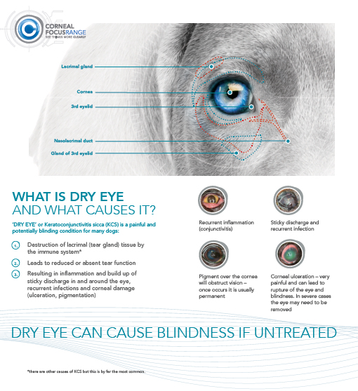 Dry eye information – TVM UK