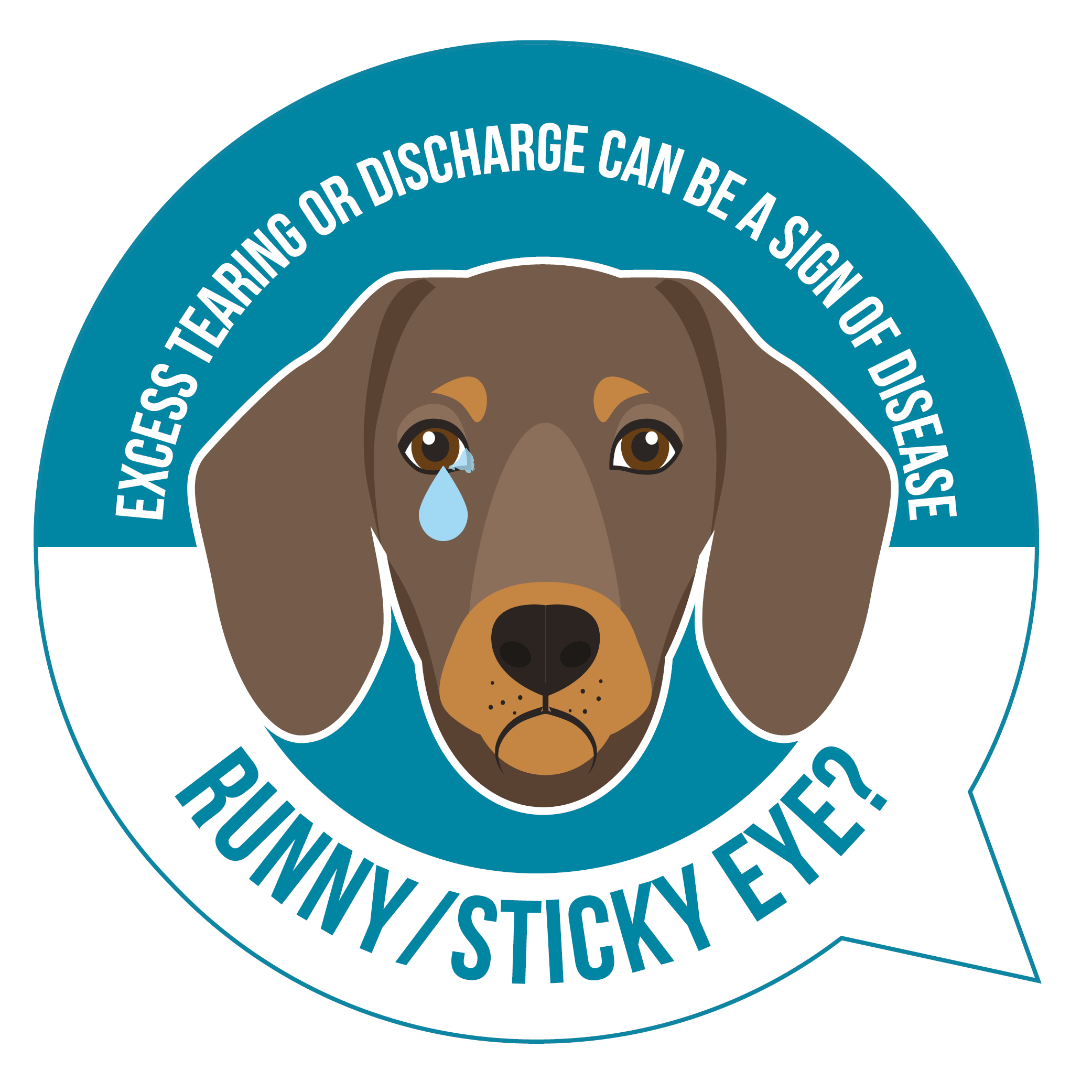 Dog with sticky and runny eyes